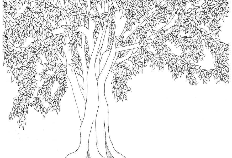 trees, Alessandra spada drawings, tree