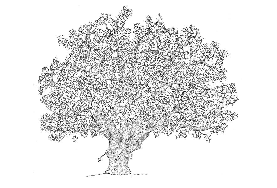 quercia, Alessandra Spada Trees | oak