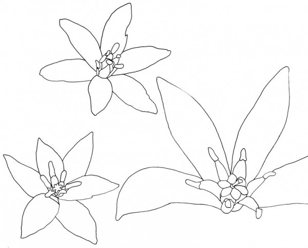 Alessandra Spada flowers sketch