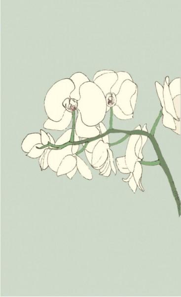 Alessandra Spada, orchidea, white